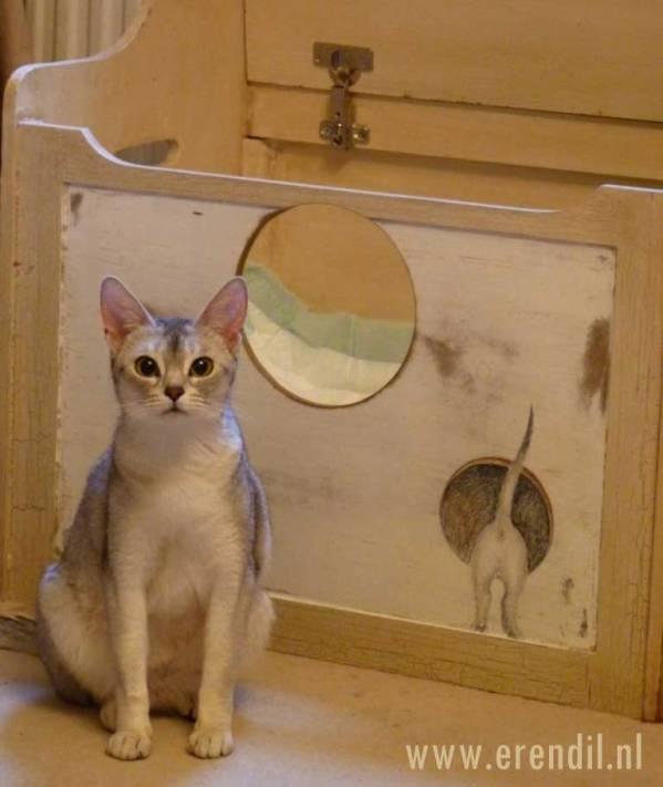 Abessijn Cattery Erendil Nestje Kittens - Nut voor haar werpkist