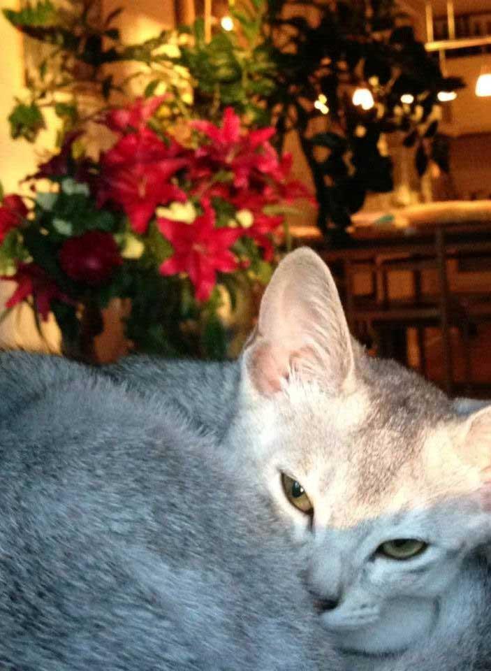 Abessijn Cattery Erendil Nestje Kittens - Vervaarlijke man
