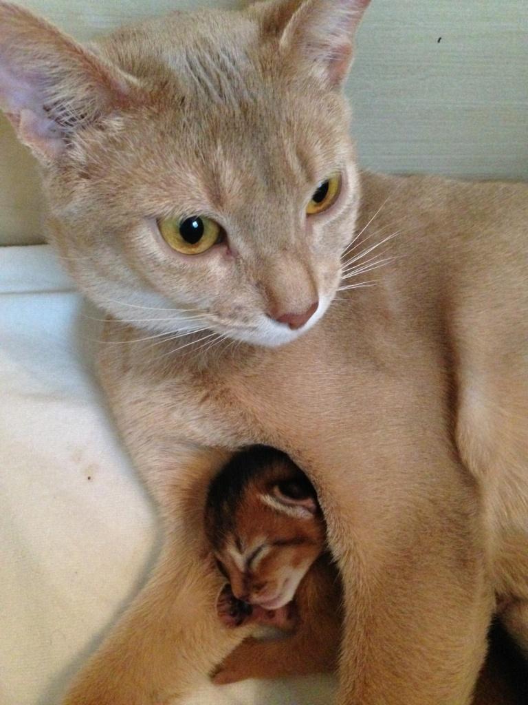 mama Nimue met kleine Baloe